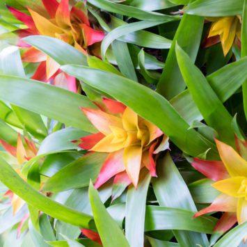 Gentse Floraliën