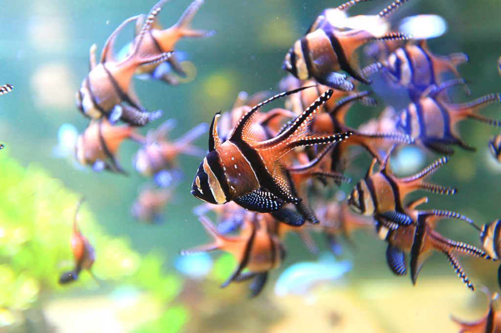 Opaalkust Boulogne-sur-Mer Groepsreis Verenigingen Bedrijven Familie Vrienden Frankrijk Aquarium Reizen