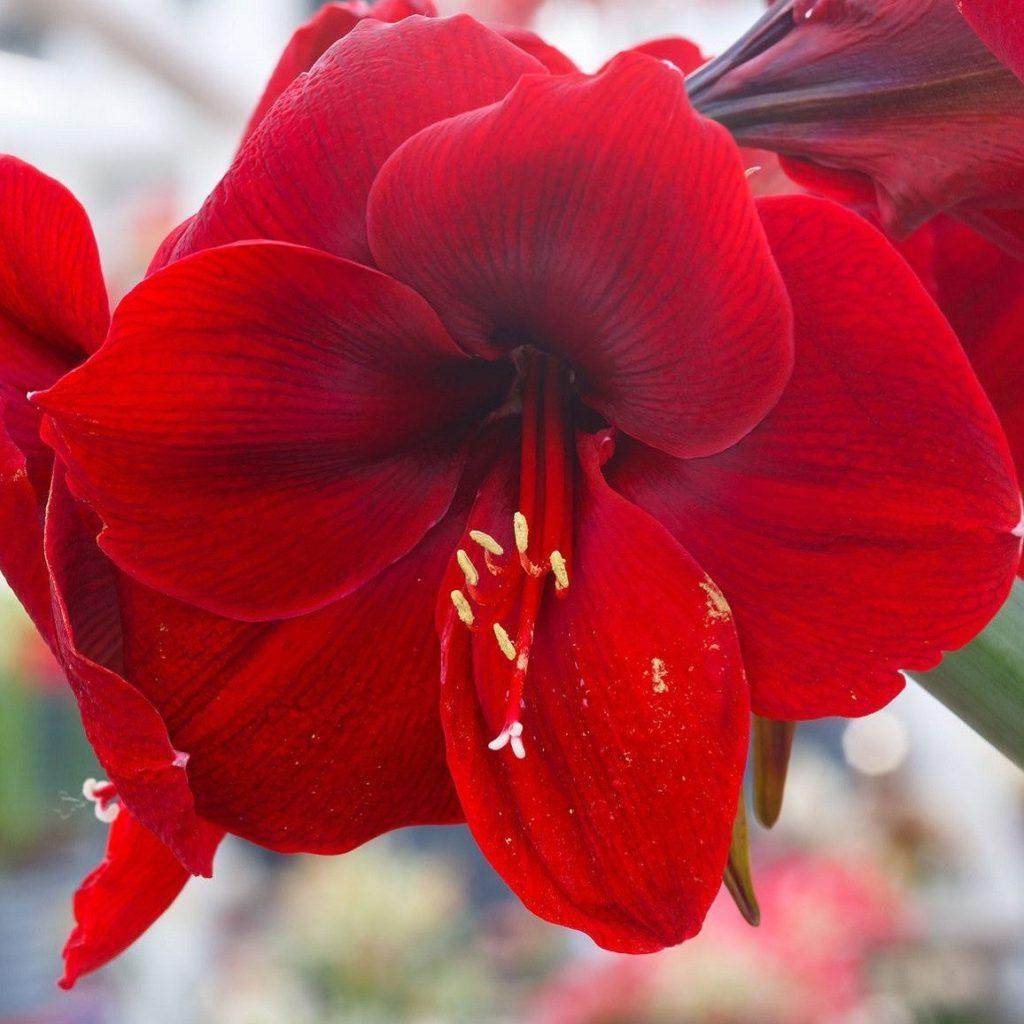 Loenhout Groepsreis Nederland Daguitstap Vereniging Familie Bedrijf bloemen aardbeien