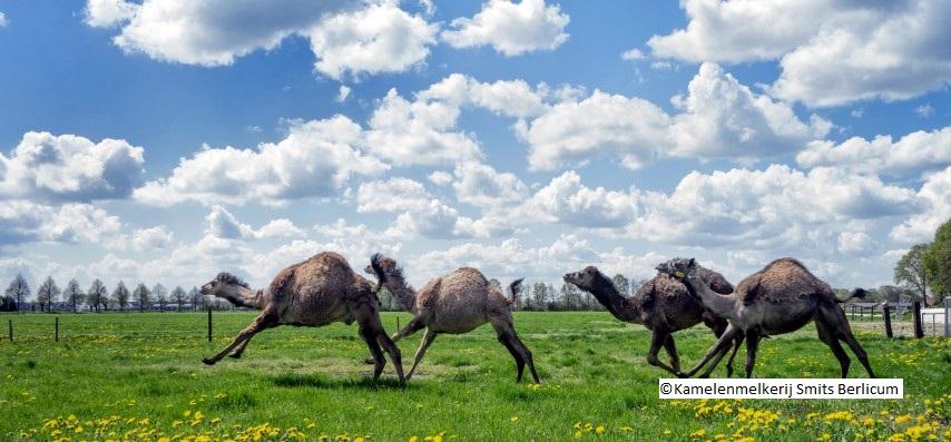 Groepsreis Nederland Berlicum Daguitstap Groepsuitstap Verenigingen Bedrijven Familie