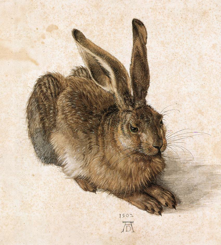Durer_Young_Hare